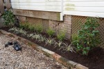 Ornamental grasses will fill in the front