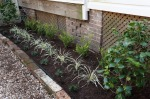 Mondo grass finishes off the planter
