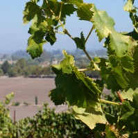View from the terrace at Viansa Winery in Sonoma Valley